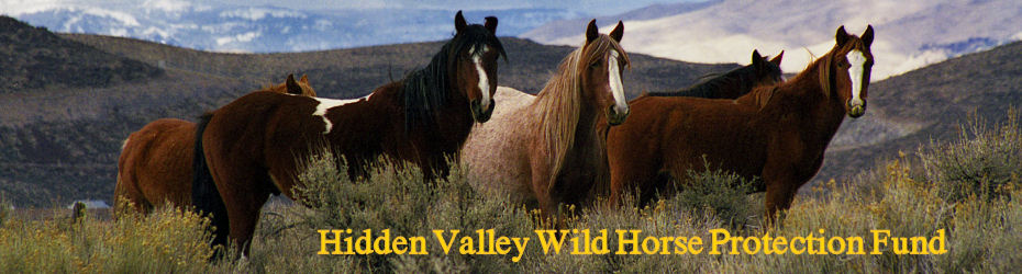 Hidden Valley Wild Horse Association
